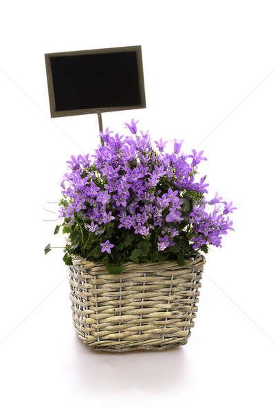 花 バスケット シールド 花 バイオレット 空っぽ ストックフォト © armin_burkhardt