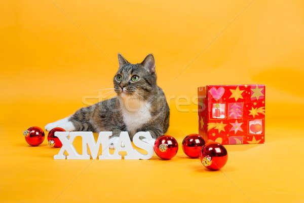 Rüya kediler hediye kutusu kahverengi kaplan kedi Stok fotoğraf © armin_burkhardt