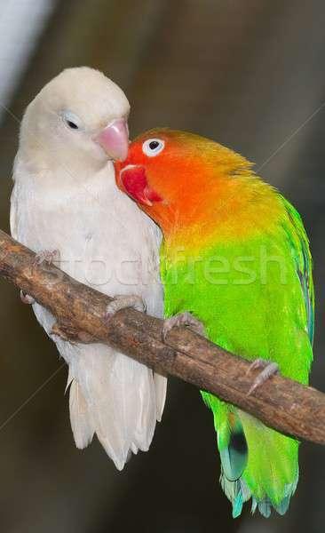 Kuş yaşamak Afrika Stok fotoğraf © arocas