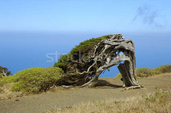 île canari Espagne ciel eau mer Photo stock © arocas