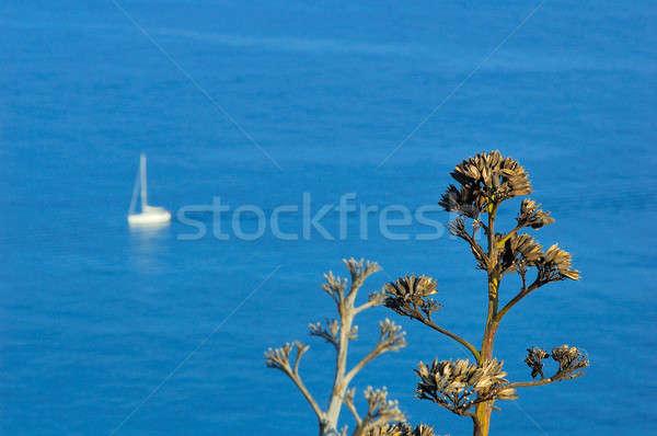 Yat bitki mavi deniz Stok fotoğraf © arocas