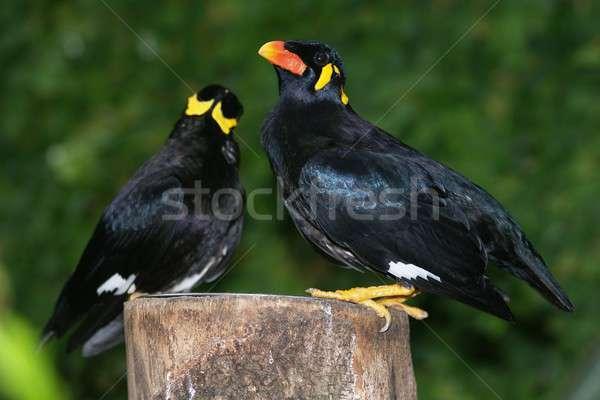 Oeil oiseau plumes colline branche bec Photo stock © arocas