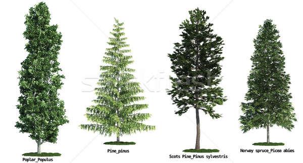 Zestaw cztery drzew odizolowany biały Zdjęcia stock © arquiplay77