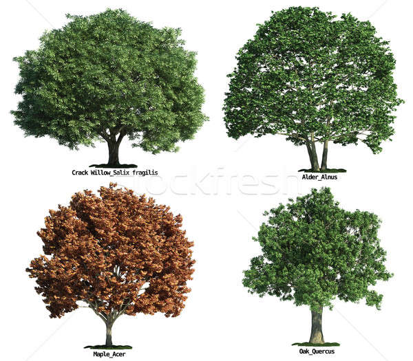 set of trees isolated on white Stock photo © arquiplay77