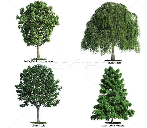 Zestaw drzew odizolowany biały cztery Zdjęcia stock © arquiplay77