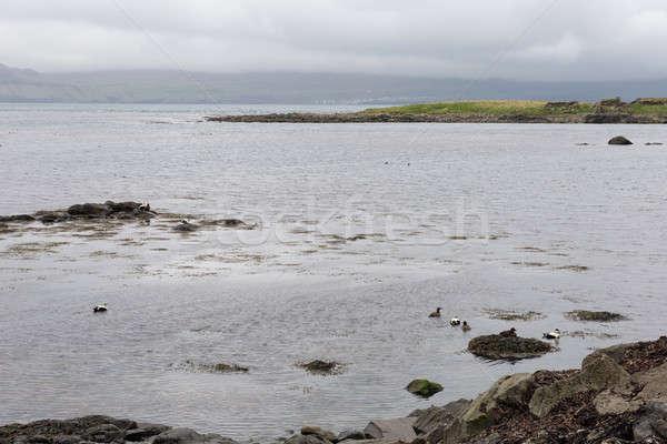 Typisch landschap eilanden groen gras bergen zee Stockfoto © Arrxxx