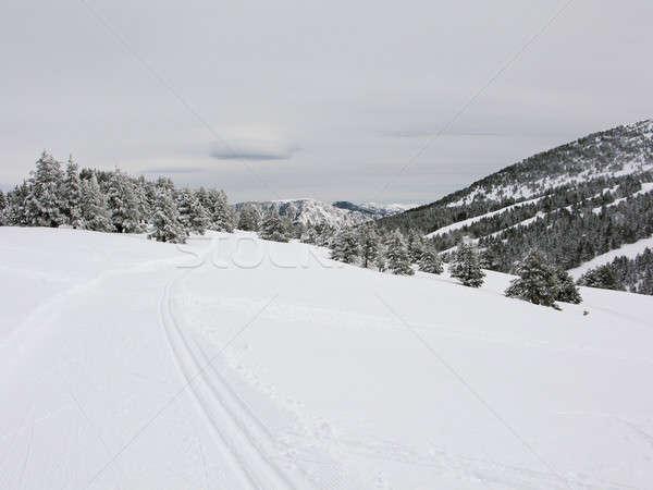 雪 山 山 スペイン ラ ツリー ストックフォト © Arrxxx