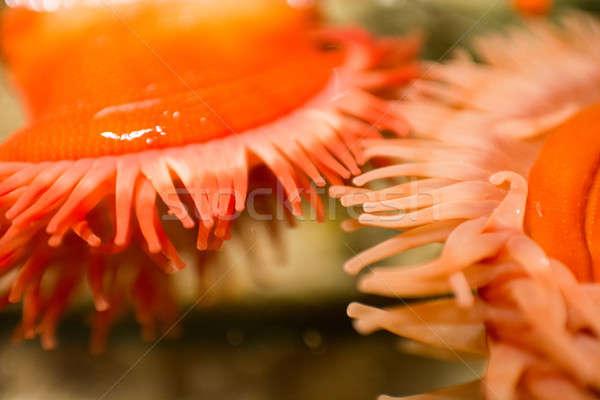 Mar dois mar vermelho água aquário Foto stock © Arrxxx