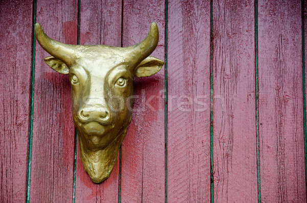 golden cow head on red wall Stock photo © Arrxxx