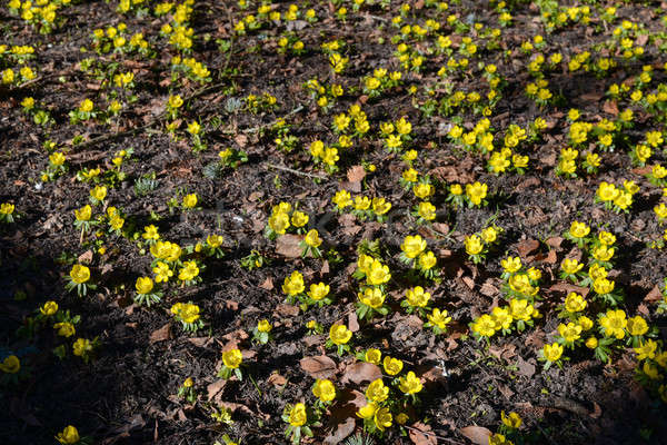 Winter veld bloei bloem gras bos Stockfoto © Arrxxx