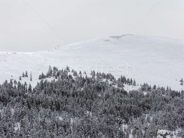 Bos winter gedekt sneeuw blauwe hemel landschap Stockfoto © Arrxxx