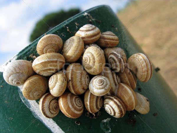 Land snails Stock photo © Arrxxx