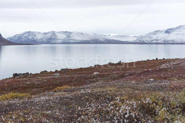 Арктика пейзаж поздно лет рано осень Сток-фото © Arrxxx