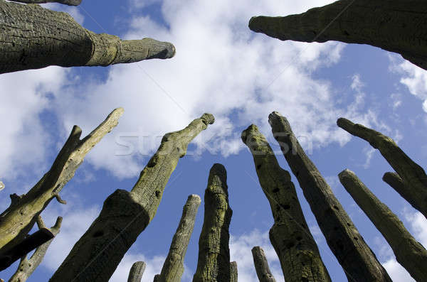Leafless tree stems as seen against the blue sky Stock photo © Arrxxx