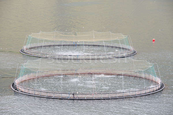 Salmon farm fish net Stock photo © Arrxxx