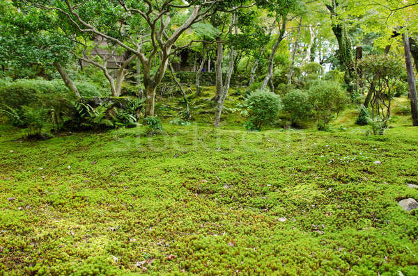 Moss in a japanese garden Stock photo © Arrxxx