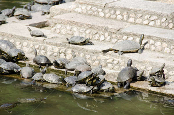 Turtles on stairs in a temple Stock photo © Arrxxx