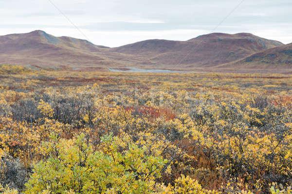 Landschap bergen Geel bruin bladeren wolken Stockfoto © Arrxxx