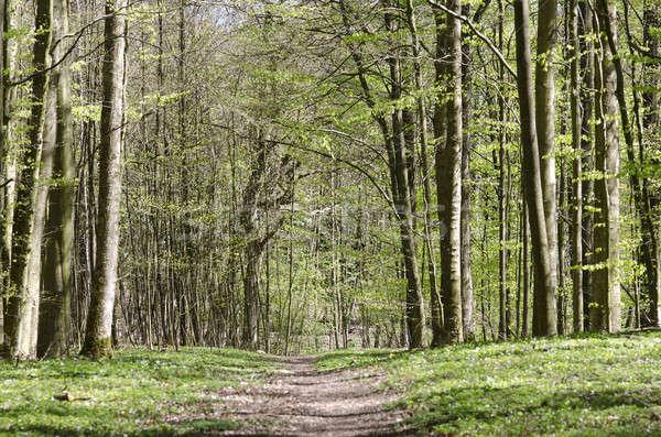 Caminho floresta primavera madeira parque Foto stock © Arrxxx