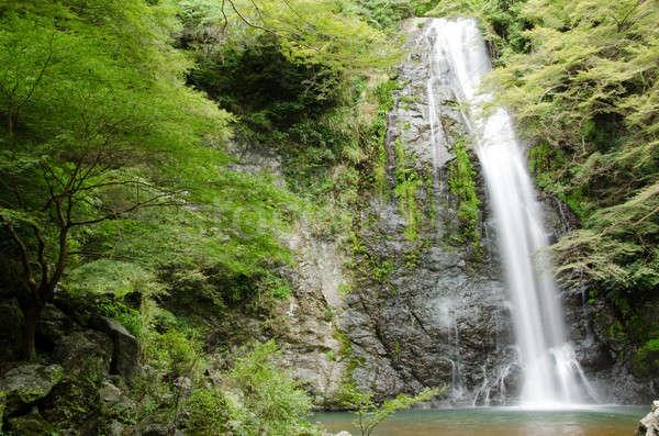 Water vallen park Japan groene esdoorn Stockfoto © Arrxxx