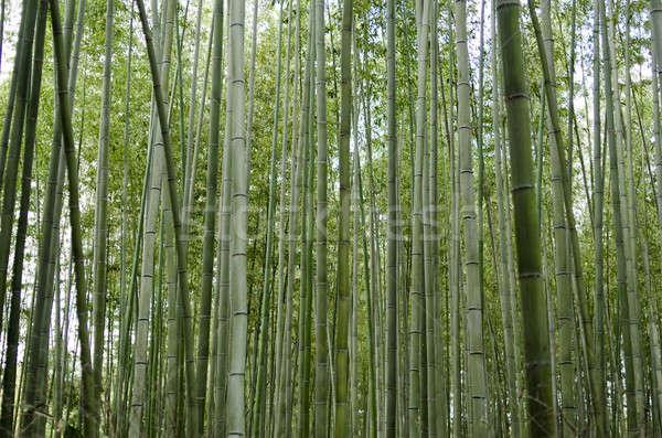 Bambù foresta lato verde albero foglia Foto d'archivio © Arrxxx
