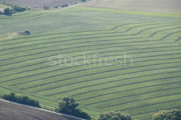 Trekker gras hooi zomer business Stockfoto © Arrxxx