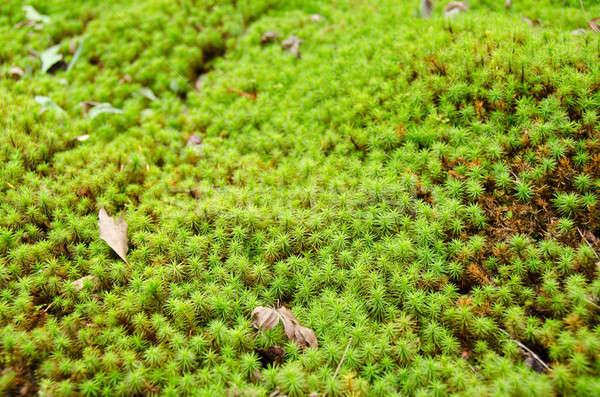 Mos bos groene voorjaar natuur Stockfoto © Arrxxx