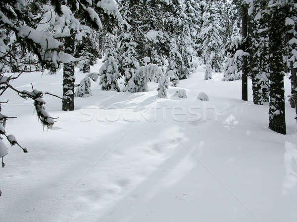 Floresta inverno coberto neve sombras luz do sol Foto stock © Arrxxx