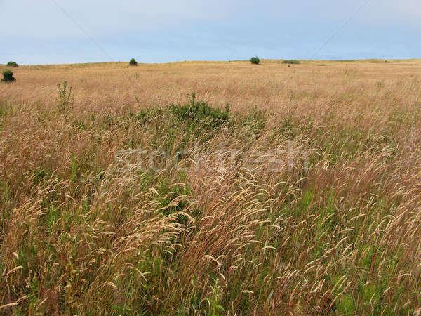 Lang gras weide san juan eiland Washington Stockfoto © Arrxxx