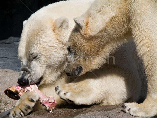 Twee polair beren eten stuk paard Stockfoto © Arrxxx
