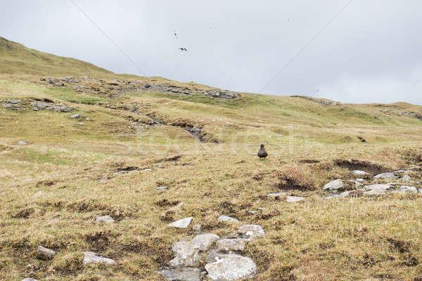 пейзаж Арктика типичный зеленая трава пород Сток-фото © Arrxxx