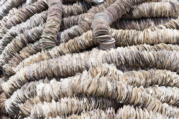 Background of Scallop shells Stock photo © Arrxxx