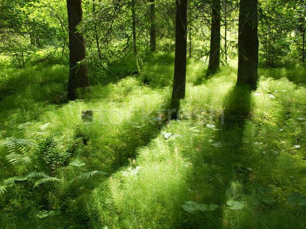 Licht schaduw bos zonneschijn Zweden Stockfoto © Arrxxx