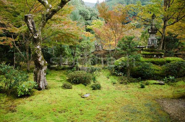 日本語 庭園 苔 古い 木 秋 ストックフォト © Arrxxx
