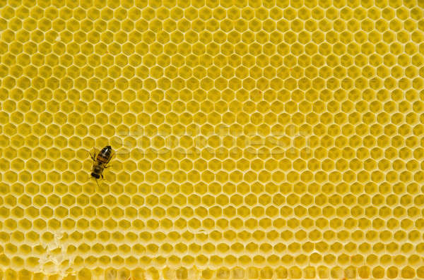 Honeycomb pattern with bee Stock photo © Arrxxx