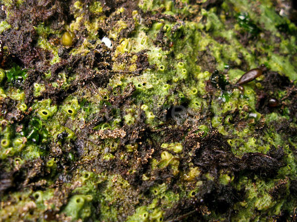 Mariene spons groene zee zwembad dier Stockfoto © Arrxxx