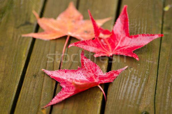 Rood bladeren houten oppervlak najaar vallen Stockfoto © Arrxxx