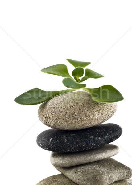 Zöld élet közelkép kiegyensúlyozott kő torony Stock fotó © Arsgera