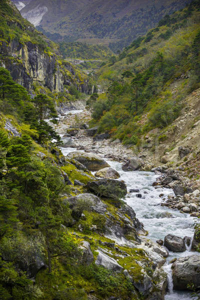 River and forest in Himalayas Stock photo © Arsgera