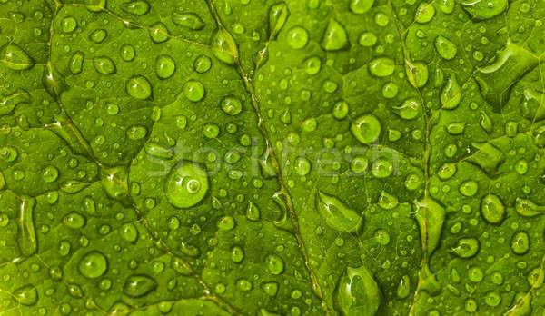 Floral ambiental patrón hoja verde gotas extrema Foto stock © Arsgera