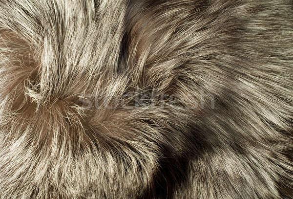 Texture - Beautiful polar Fox fur Stock photo © Arsgera