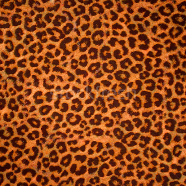 Leopard skin background or texture Stock photo © Arsgera