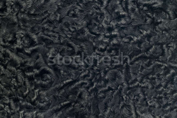 Closeup of black sheepskin fur Stock photo © Arsgera