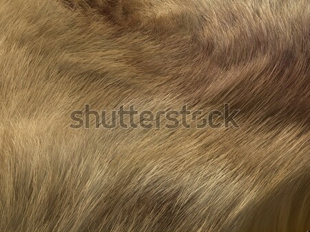 Fox fell or fur: brown pattern or background Stock photo © Arsgera
