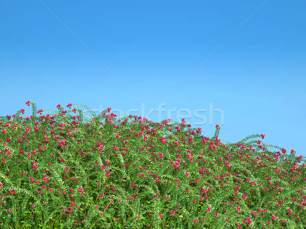 Cranberry thicket and blue sky Stock photo © Arsgera