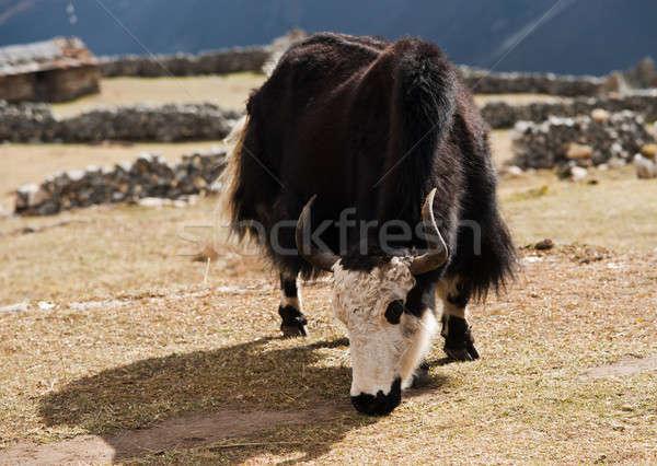 Kırsal hayat Nepal köy himalayalar doğa Stok fotoğraf © Arsgera