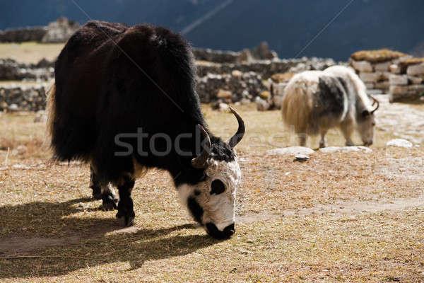 Nepal aldeia himalaia viajar caminhadas grama Foto stock © Arsgera