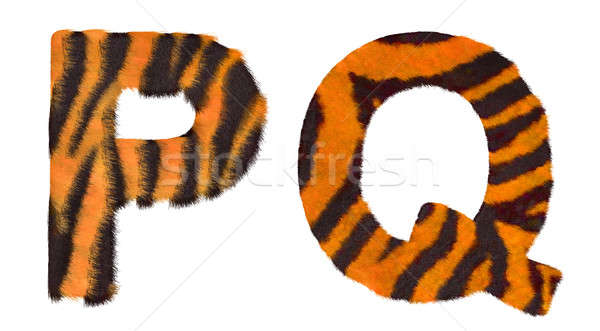Tiger fell P and Q letters isolated  Stock photo © Arsgera