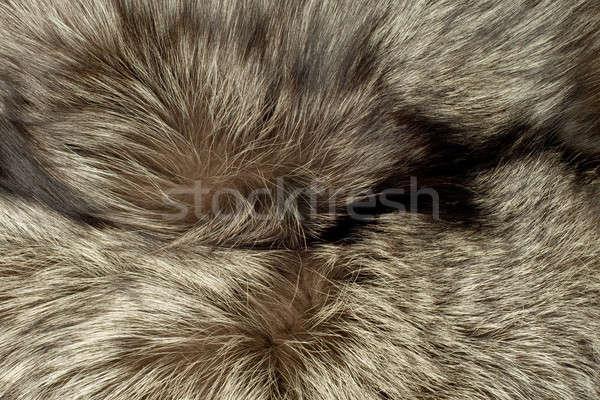 Fox piel útil primer plano hermosa polar Foto stock © Arsgera