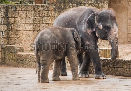 Feeding the elephant calf by female Stock photo © Arsgera